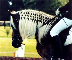 Picture from www.haflingerhorses.com