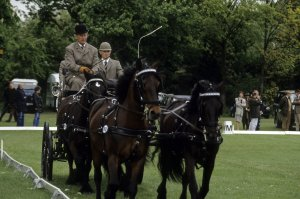 The Duke of Edinburgh participating in carriage driving at the Royal Windsor Horse Show in 1975. Picture from The Duke of Edinburgh participated in carriage driving at the Royal Windsor Horse Show in 1975 Picture from The Duke of Edinburgh participated in carriage driving at the Royal Windsor Horse Show in 1975 Picture from www.popsugar.com