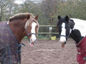 Smartie is the cute brown thing on the left. Picture from www.tvequestrian.co.uk