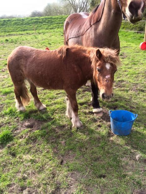 Imagine yourself or your child in the place of this little mare. I wonder if this would be pleasant...