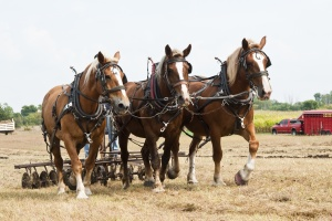 Horse-drawn farming demonstrations during the Homesteader Day Harvest Festival at the Beaver Creek Nature Area in South Dakota. Picure from http://www.motherearthnews.com