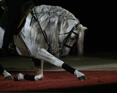 Picture from http://www.horsenation.com