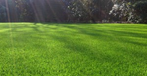 Picture from http://www.artificiallawn.co.uk/